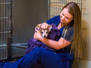 other services Evergreen Veterinary Hospital